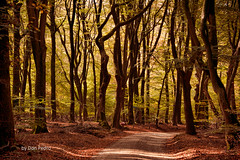 Speulderbos Putten (Don Pedro de Carrion de los Condes !) Tags: donpedro d700 bos speulderbos loofbos herfst herfstbos bosgebied veluwe dansendebomen putten