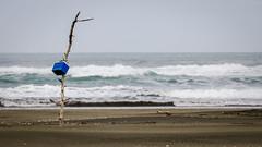The Marker (Stefan Marks) Tags: tasmansea chillybin driftwood nature ocean outdoor sky aucklandwaitakere northisland newzealand nzl
