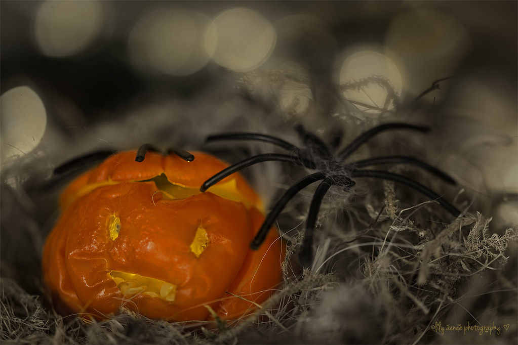 Hallo Halloween Decoraties : The world s most recently posted photos of halloween and spiders