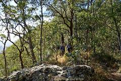 Bushwalking with Flickr friends Netty and Pombat (Tatters ✾) Tags: australia queensland mainrangenationalpark bushwalking bushwalkers people ridge