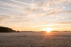 _DSC9537.jpg (thomasresch) Tags: sonneaufgang sun nordhaide panzerwiese nebel hartelholz sunrise sonne