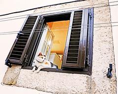 Obrigato (kirstiecat) Tags: cat chat gato gata window catwindow portugal obrigado feline lisbon lisboa animal caturday furry
