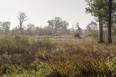 _IMG2448 (Henk de Regt) Tags: the netherlands gelderland natuur nature landscape grass bos forest trees zonsopkomst sunset sundown zonsondergang swamp nederland veluwe landschap gras water bomen moeras