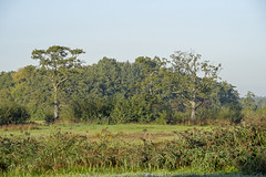_IMG2435 (Henk de Regt) Tags: the netherlands gelderland natuur nature landscape grass bos forest trees zonsopkomst sunset sundown zonsondergang swamp nederland veluwe landschap gras water bomen moeras