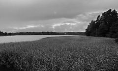 Ristiniemi (Antti Tassberg) Tags: ristiniemi syksy bw laurinlahti landscape espoo pilvi ranta autumn beach blackandwhite cloud fall monochrome shore helsinki suomi fi