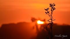 nassed heart (cornelia_auguste) Tags: abendstimmung abendstunde abendlicht abenddämmerung abendhimmel abendsonne action corneliaauguste colour düsseldorf deutschland dämmerung distel detailaufnahme einzigartigkeit farbenspiel farben farbenrausch germany gegenlicht himmel himmelsstimmung himmelsfarben lichtstimmung light moment nrw nature natur outdoor orange skyline sonnenuntergang sunset sky sonne sun herz träume technik trecker