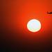Flying Near the Sun, variant