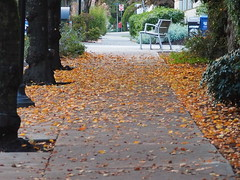 My Walkway to Home (Irene, W. Van. BC) Tags: mywalkwaytohome walkway walking sidewalk amblesidewestvancouverbc amazingnature wonderfulnature beautifulnature leaves leavesonground fallleaves fallscenes fallfoliage fallenleaves trees treesilhouettes treetrunks outdoors outdoorscenes outlines shrubs shrubbery 1001nights 1001nightsmagiccity 1001nightsmagicwindow chairs outdoorchairs signs signposts redfirehydrant