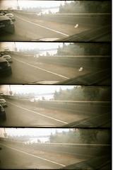 SuperSampler_Provia400X_1869_0918033 (tracyvmoore) Tags: lomo lomography supersampler film provia400x analog