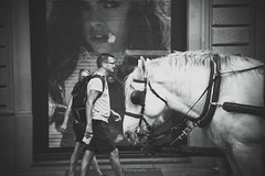Looking back at days of four instead of two (.KiLTRo.) Tags: kiltro it italia italy florence firenze city toscana street animal people horse