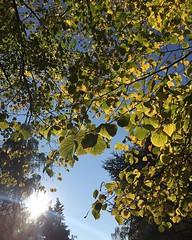 Efterårssol! (tinze) Tags: moblog