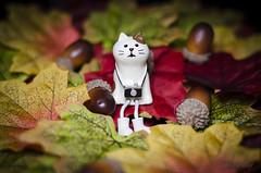 Otoño (victoria@) Tags: nikond5100 macro macrofotografia macrophoto otoño autumn gato mascota