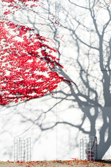 Blossom (Eno world) Tags: autumn abstract leaf lost ghost karlsruhe germany