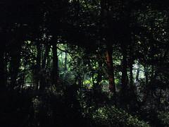 (Kelvin P. Coleman) Tags: canon powershot stokebardolph summer night ramble hike walk rural renderingplant industrial floodlighting floodlit wood woodland trees vegetation light silhouette fence hdr backlight backlit contrejour outdoor