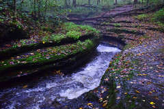 Hell's Hollow (jna.rose) Tags: hells hollow pennsylvania nature outdoor foggy creek water river nikon d5300 western pa outdoors photography