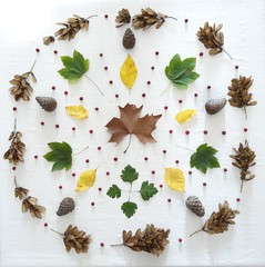 Autumn wheel art (Scagliediterra) Tags: creativity creazioni art arte naturamorta colors colori foglie leaves