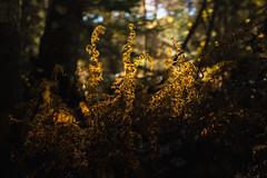 winterriveroct18-302-9 (carrieellengregory) Tags: 2018 autumn carriegregoryphotography fall october pei winterriver