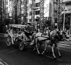 city tour (zeNat Photography) Tags: blackandwhite bnw blackwhite bw streetphotography street schwarzweiss schwarzundweiss noiretblanc monochrome candid candidphotography animals horse horses city urban