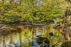 Thwaite Beck Pool (HDR) Oct 2018 (Richard Laidler) Tags: autumn autumncolour autumncolours autumntints beck bright bubbles cascade color colors colour fall fine gill landscape peaceful pebbles reflection reflections rock rocks stream sun sunny sunshine tranquil waterfall dappledshade hdr