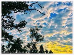 Sky (Meraj.) Tags: appleiphone iphone6s iphone apple greens trees green clear skies bluesky sky