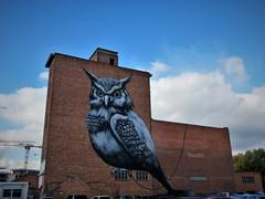 ROA / Hasselt - 18 okt 2018 (Ferdinand 'Ferre' Feys) Tags: hasselt belgium belgique belgië streetart artdelarue graffitiart graffiti graff urbanart urbanarte arteurbano ferdinandfeys roa