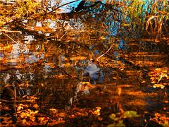 Magic of Nature - Autumnal reflections on the lake (Ostseetroll) Tags: badsegeberg deu deutschland geo:lat=5394810942 geo:lon=1031908078 geotagged schleswigholstein segebergersee herbst spiegelungen see wasser magic nature autumnalreflections lake water olympus em10markii