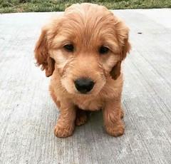 Hi I'm Tucker