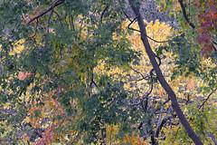 Fall Cloudy Color Chaos (Modkuse) Tags: velvia fujifilmxt2velvia nature autumn fall fallcolors fujifilm fujifilmxt2 xt2 xf55200mmf3548rlmois fineart fineartphotography photoart art