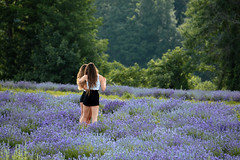 About Next Shot (kodakid18) Tags: lavande lavender flowerfields fields summer summerdays filedsofflowers flowers models girls people saariysqualitypictures rosepetal dslr1 80