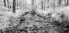 Rocky Creek (Neal3K) Tags: ir infraredcamera kolarivisionmodifiedcamera henrycountyga georgia bw blackandwhite