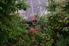 20181114_RX_00230 (NAMARA EXPRESS) Tags: street warehouse roof plant tree daytime autumn fall cloudy outdoor color landscape toyonaka osaka japan sony rx0 dscrx0 carlzeiss tessar t 424 namaraexp