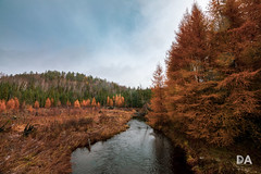 Land O' the Larches (Tamron 15-30 G2 Review) (Thousand Word Images by Dustin Abbott) Tags: 2018 autumn tamronsp1530mmf28vcg2 adobelightroomcc canon5d4 thousandwordimages dustinabbottnet travel dustinabbott larch photography petawawa withmytamron canoneos5dmarkiv 5dmarkiv ontario 1530g2 canada pembroke a041 photodujour tamarack