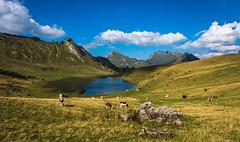 _DSC2428 (Law yvan) Tags: hautesavoie lac calme seul randonnée