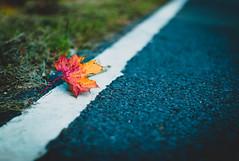 Country road in autumn (Eckehard Straßweg) Tags: leicam9 einsam einsamkeit nature natur autumn laub herbstlaub outdoor road strase herbstzeit herbst lines linien bokeh