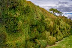 Bulging Boundary (Stephen Reed) Tags: green hedge nationaltrust somerset england nikon d7000 lightroomcc colorefexpro4