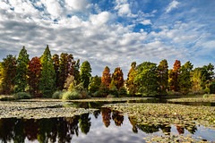 I Stood In Awe (RevCheck Photography) Tags: tree trees pine autumn fall season colour red orange yellow green nature wild outside outdoors explore exploring natural beauty stunning landscape sky clouds river lake water scenery canon eos 6d ef24105mm f4l is usm