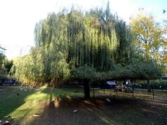 born_084 (OurTravelPics.com) Tags: born tree birds kasteelpark zoo