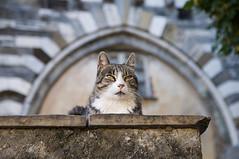I tuoi pensieri... sembrano così lontani... (fabrizio_buoso) Tags: felini felinos cat cats chats chat gatti gatto gatos gattiitaliani