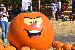 DSC_2558 (earthdog) Tags: 2018 needstags needstitle nikon d5600 nikond5600 18300mmf3563 fall autumn pumpkinpatch spinafarms farm