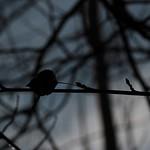 'Leaf's Noir Moment' thumbnail