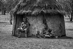 Imba ( Philippe L PhotoGraphy ) Tags: afrique namibie kuneneregion na afric namibia désert etosha fauve dunesoiseaux rapace philippelphotography
