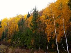 Autumn. (trude.kristiansen1) Tags: colours nature thebeautyofnature autumn
