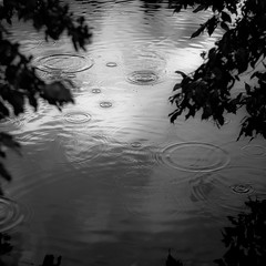 Quiet Corners 007 (noahbw) Tags: captaindanielwrightwoods d5000 nikon abstract blackwhite blackandwhite branches bw forest leaves monochrome natural noahbw pond quiet rain raindrops reflection ripples silhouette square summer water waterdrops woods