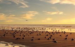 Sunny autumn beach (Behappyaveiro) Tags: beach espinho espinhobeach portugal europa europe céu sky sand areia seagulls gaivotas outono autumn aveiro hot calor oceanoatlântico atlanticocean sun sol