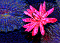 Time Again (LotusMoon Photography) Tags: macro manipulated waterlily fractalius postprocessed pond water flower floral blossom sparkly pattern texturized bright brilliant annasheradon nature lotusmoonphotography vibrant