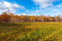 October (gubanov77) Tags: autumn forest nature landscape russia pokrov petushinskiyraion vladimiroblast vvedensky october