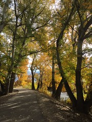 IMG_2766 (August Benjamin) Tags: provorivertrail provocanyonpkwy provoriver provocanyon provo orem utah mountains fall fallcolors trees leaves autumn jogging southfork vivianpark