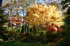 Fall in the Hamptons (DOTCALM9) Tags: fall fallfoliage autumn longhousereserve november 2018 nikond5100 thehamptons easthampton trees leaves sculpture
