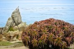 Perkins Park, (David McSpadden) Tags: coast pacificgrove rocks