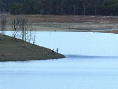 Anglers at depleting waters of Sugarloaf Dam (PsJeremy - Lots to catch up after travelling...) Tags: dam anglers silhouettes waterline drought victoria christmashills lumix low bank reservoir melbourne australia 365 aflgrandfinal 2018